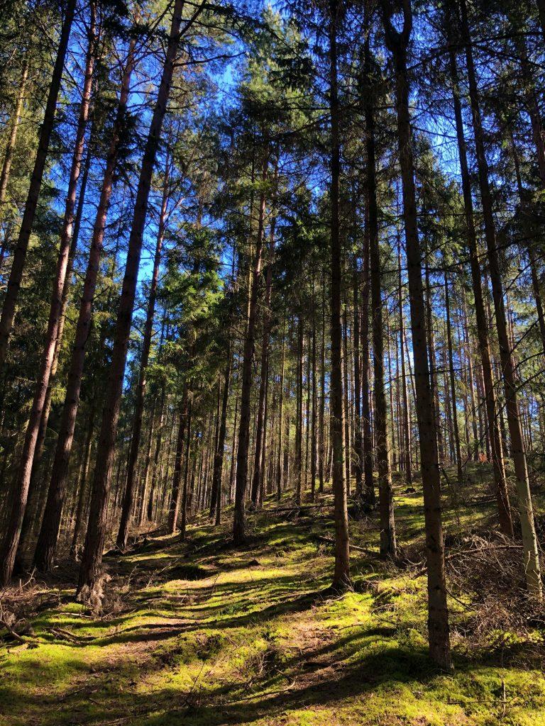 Las w Kątach Rybackich